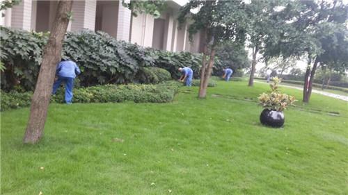 小区园林绿化2
